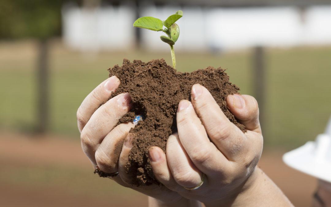 Sementes de soja devem receber cuidados especiais no pré-plantio; confira orientações