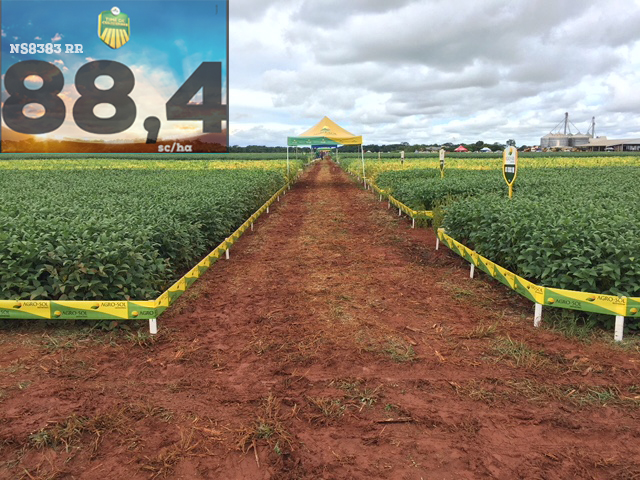 Agro-Sol tem cultivar campeã de produtividade em evento em Porto Alegre do Norte