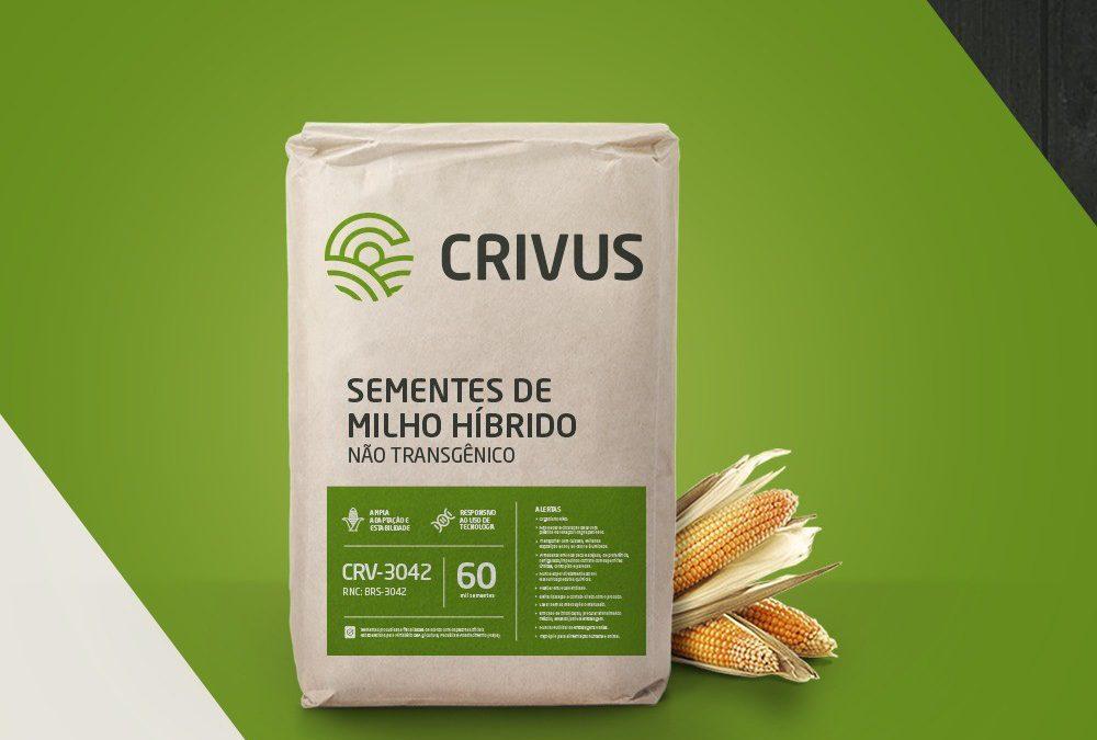 Agro-Sol entra no mercado de sementes de milho com a CRIVUS