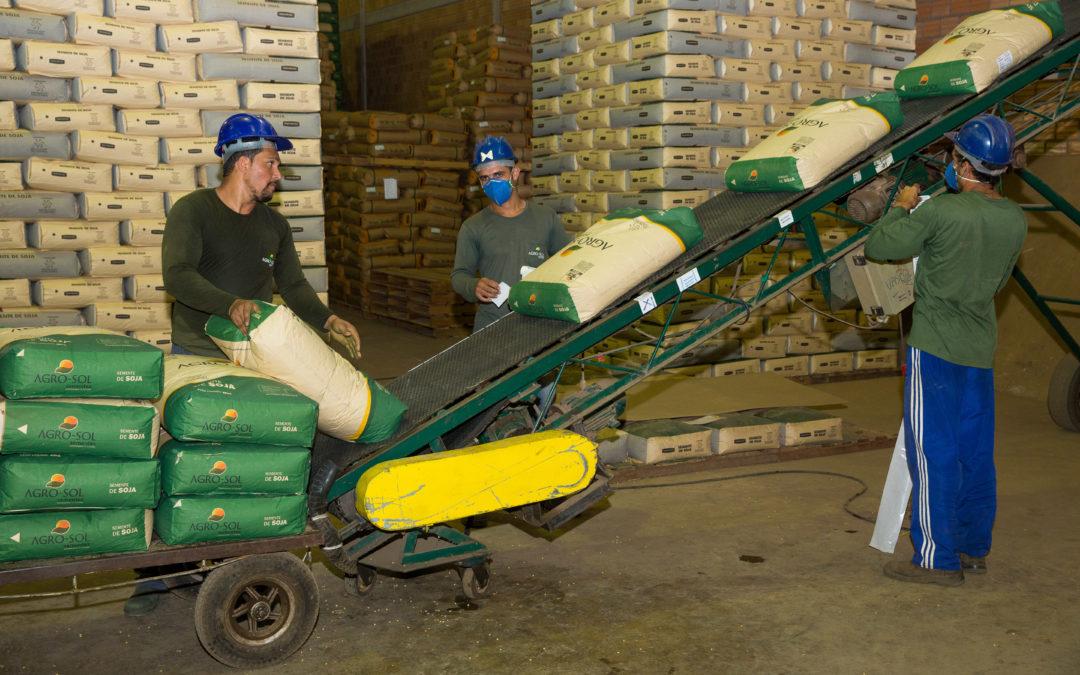 Entrega de sementes e pré-plantio: cuidados que colaboram para o sucesso da lavoura