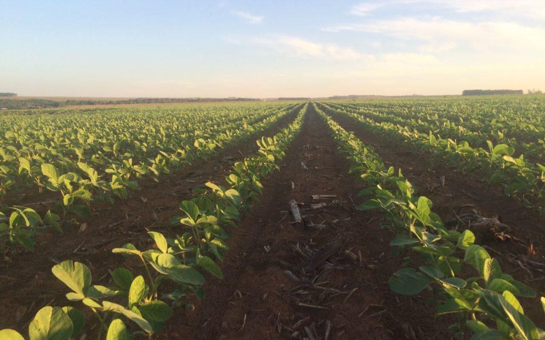 Implantação das lavouras de soja é positiva e traz boas expectativas para a colheita