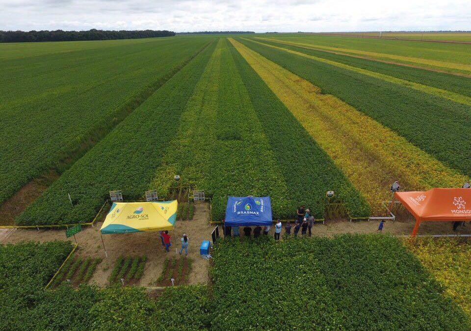 Agro-Sol apresenta cultivares em Dia de Campo em Sorriso