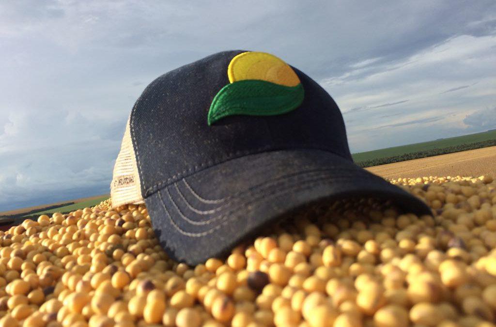 Colheita tem início com ótimos resultados e boas expectativas para semente