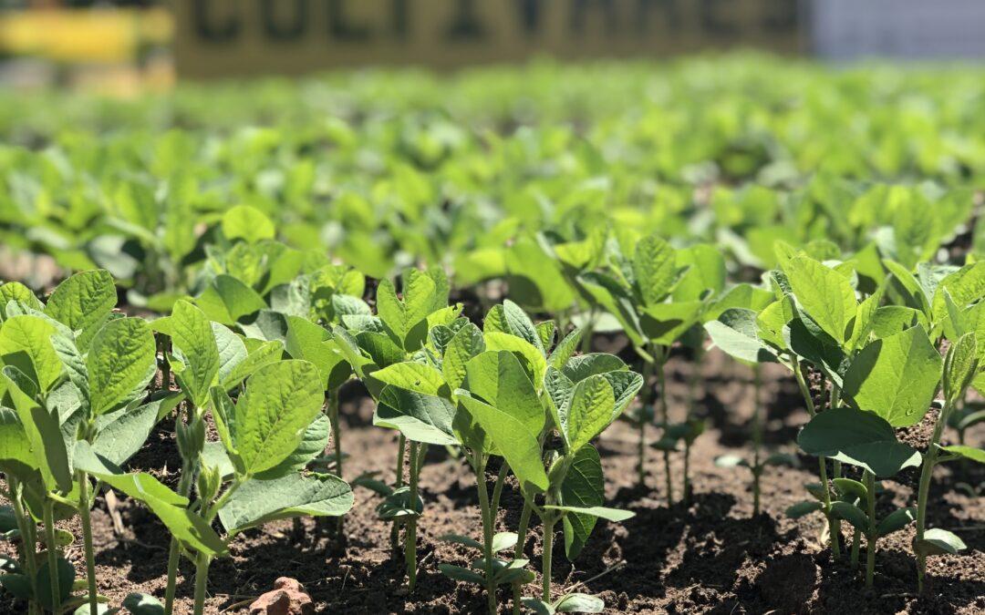 Os cuidados no pré-plantio que colaboram para uma boa germinação da semente de soja