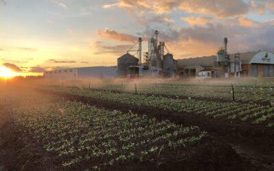 Canteiros de emergência: a poesia da produção de sementes