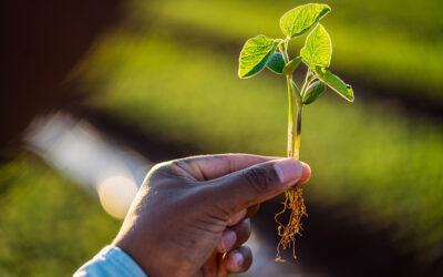 Controle de Qualidade Agro-Sol – Canteiros de Emergência 2021